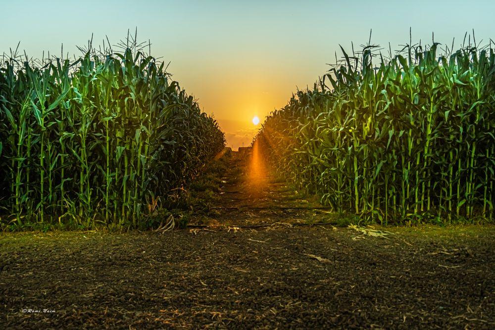 Photo in Rural #light