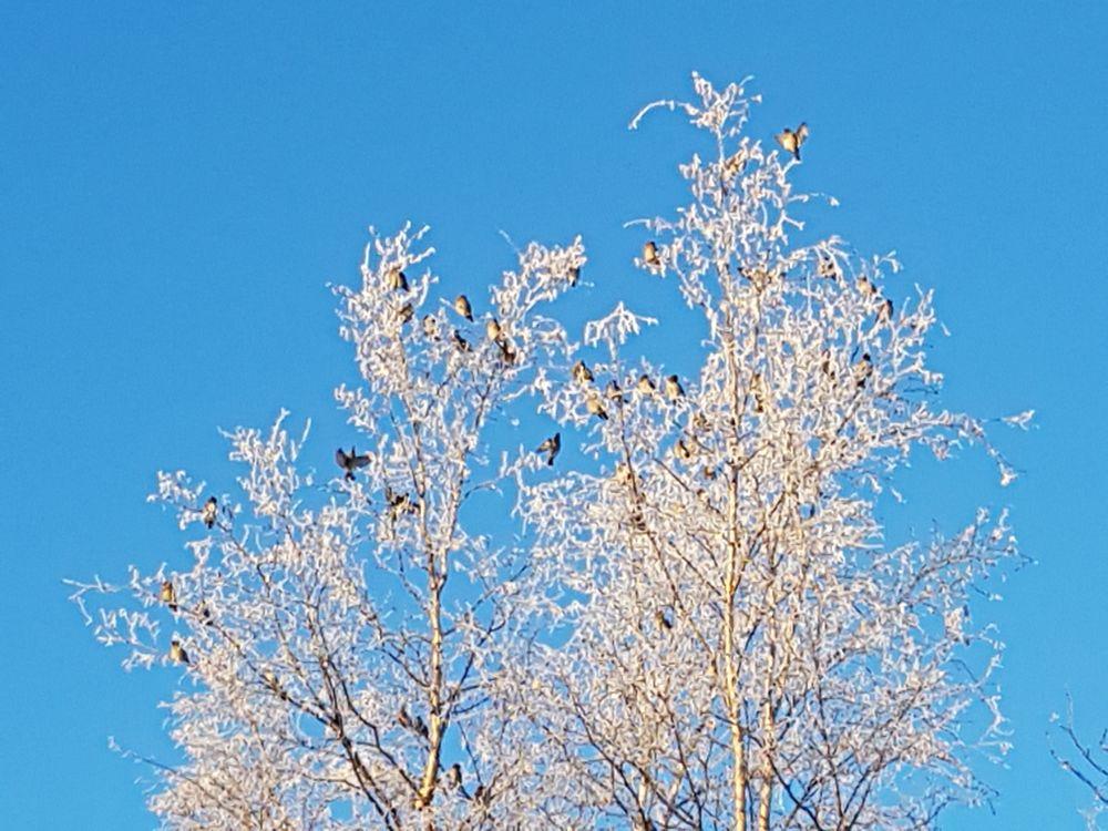 Photo in Landscape #white #trees #birds #blue #sky