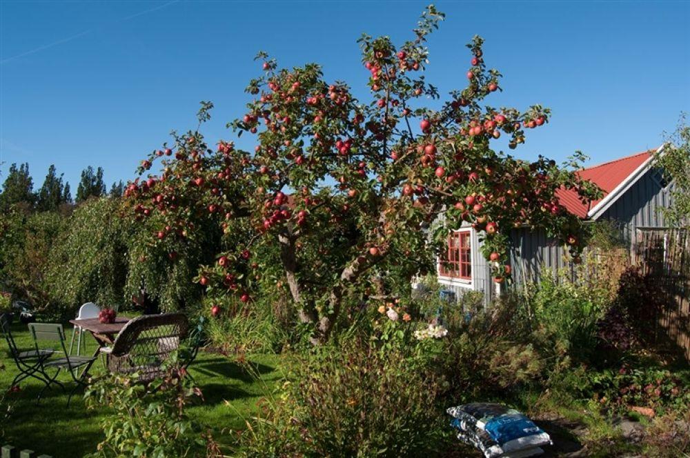 Photo in Random #göteborg #slottsskogskolonin