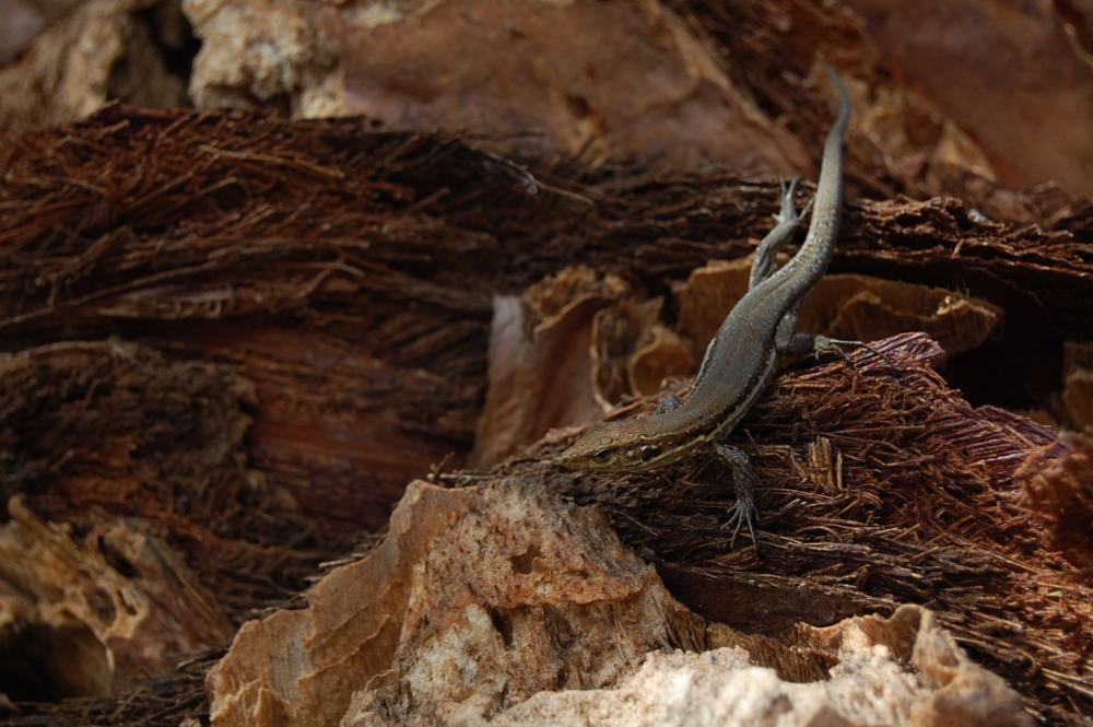Photo in Animal #lizard #park #tenerife