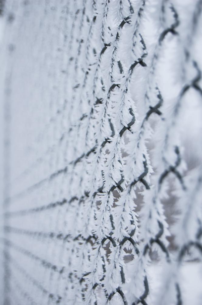 Photo in Nature #frost #winter #fence