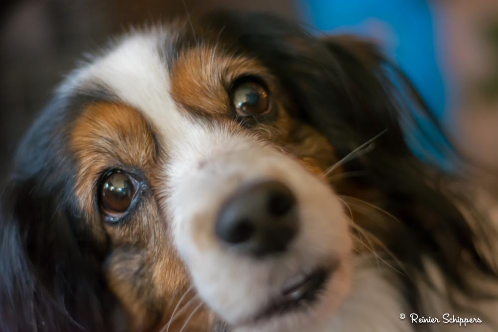 Photo in Animal #dog #cute #eyes #love