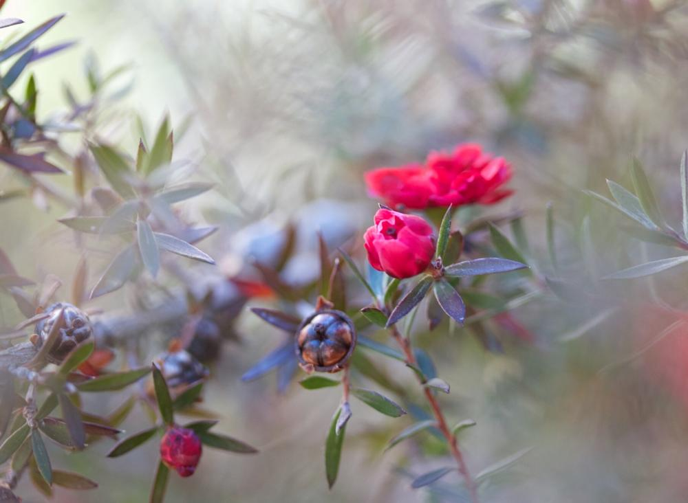 Photo in Macro #nature #garden #bush #flower #macro