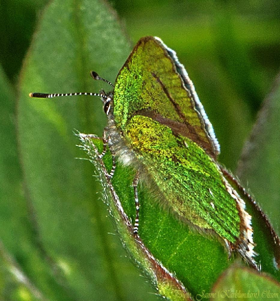 Photo in Animal #insekter #fjärilar #natur