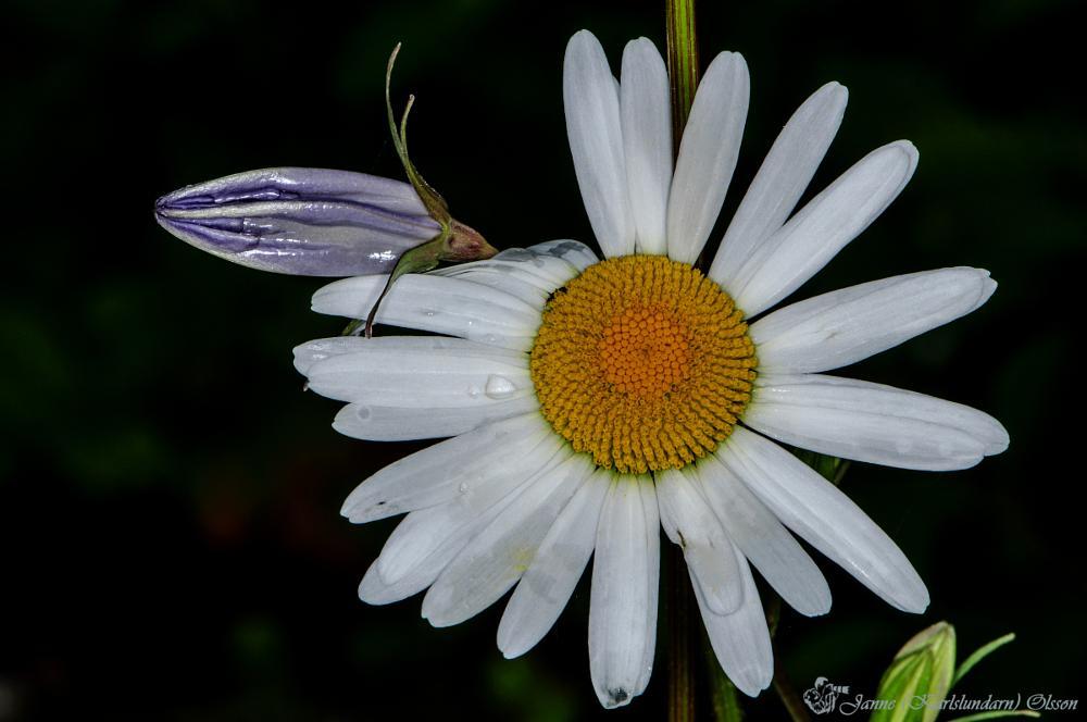 Photo in Macro #blommor #trädgård #natur