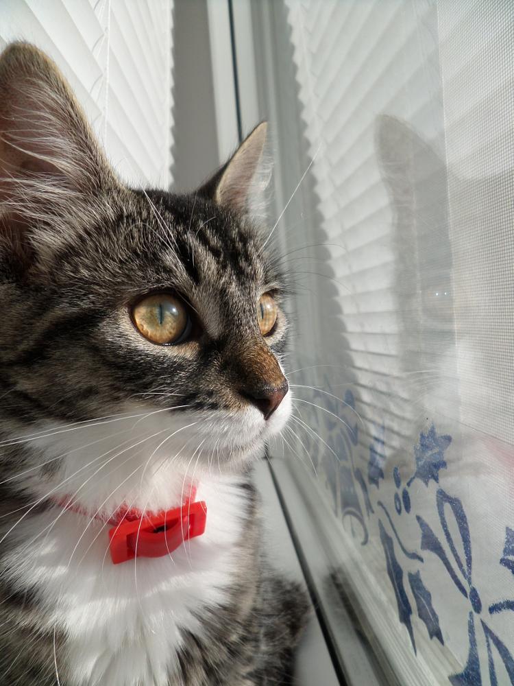 Photo in Animal #cat #love #window