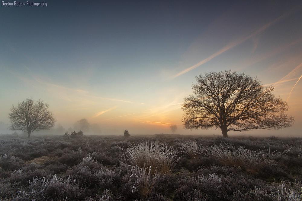 Photo in Landscape #morning #heather #sunrise #light #nature #fog #frost #landscape #heath #trees