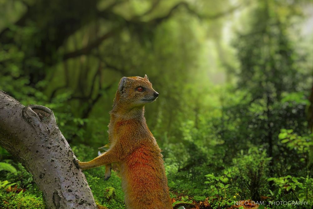 Photo in Animal #forrest #nature #ndnd