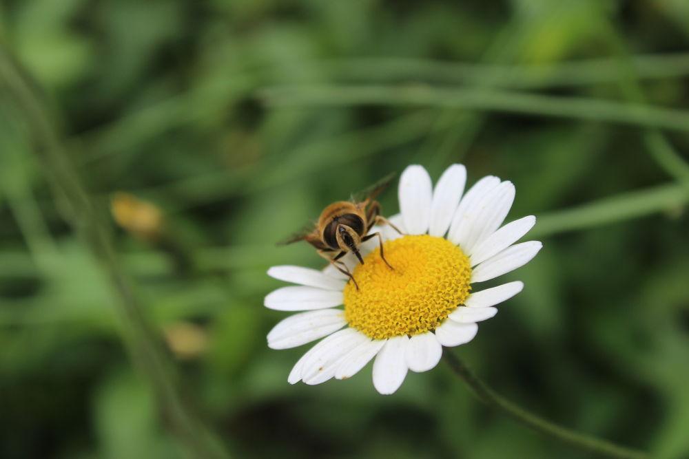 Photo in Macro #macro #flower #iskenderdelibas #bee #nice #good #best #landscape