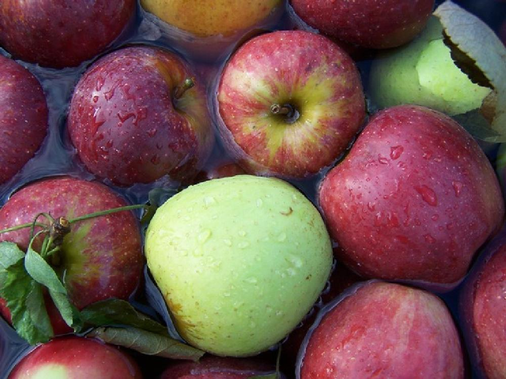 Photo in Food #apples #red delicious #picked for free #ambrosia