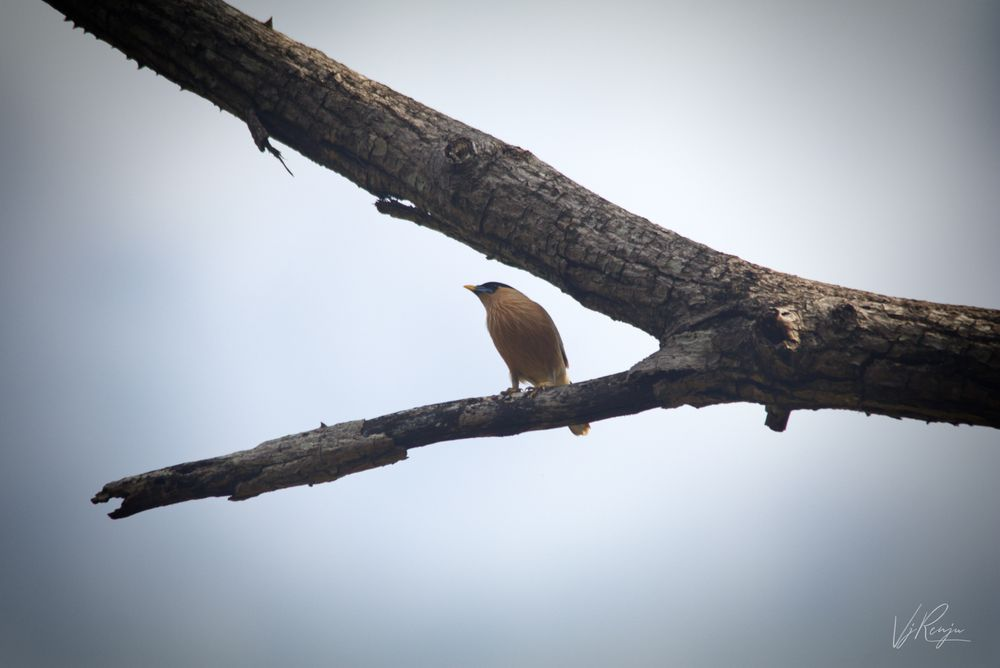 Photo in Nature #bird #tree #branch #nature #alone