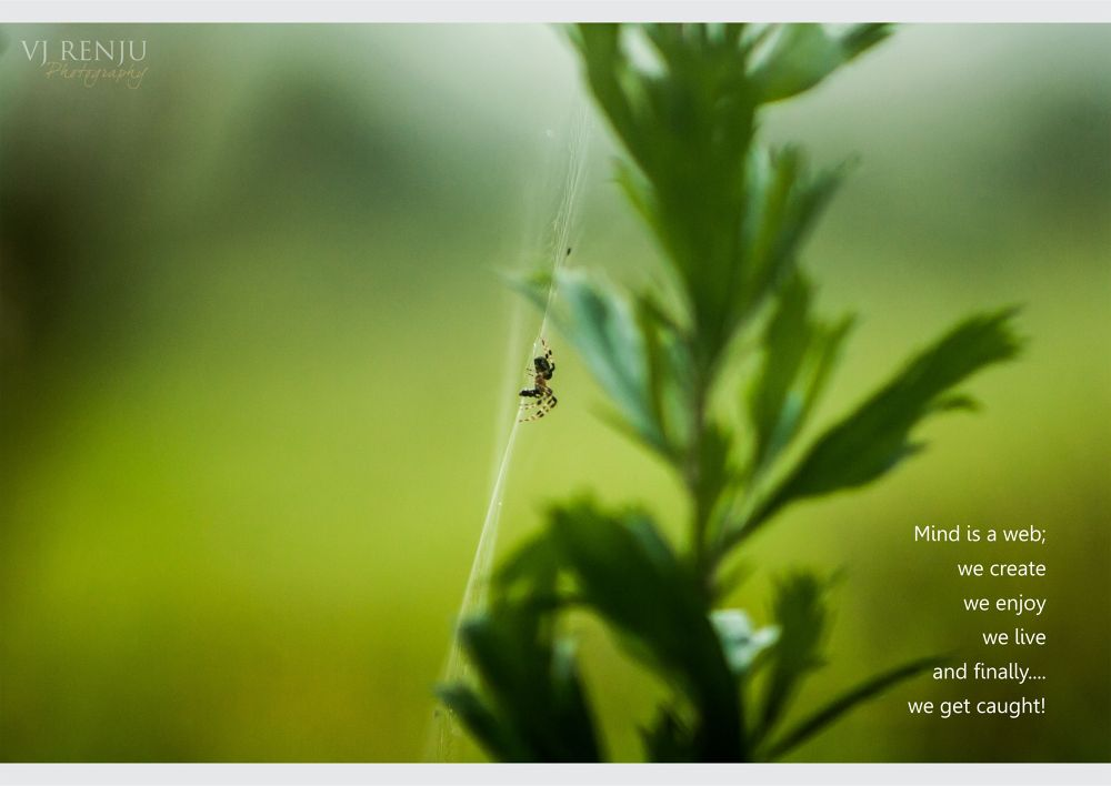 Photo in Random #caught #spider web #nature #animalistic #thoughts #motivation