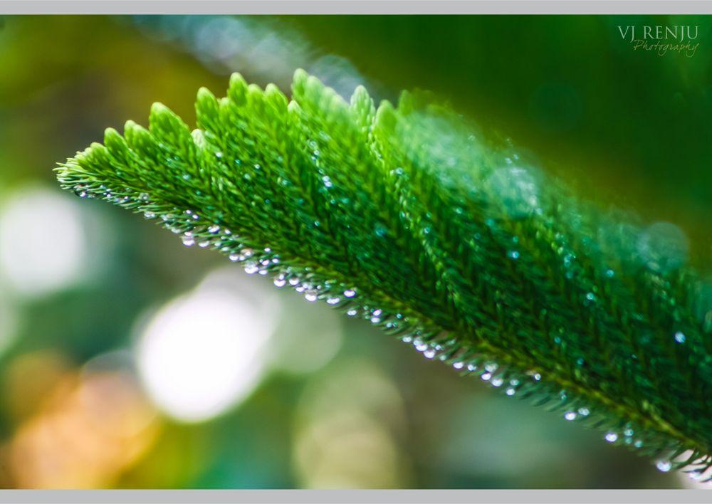 Photo in Random #nature #dewdrops #rain #drops #bokeh #green #natural