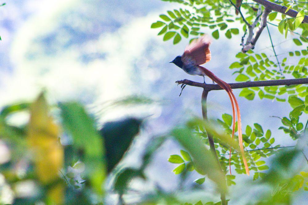 Photo in Nature #flight #bird #small #nature