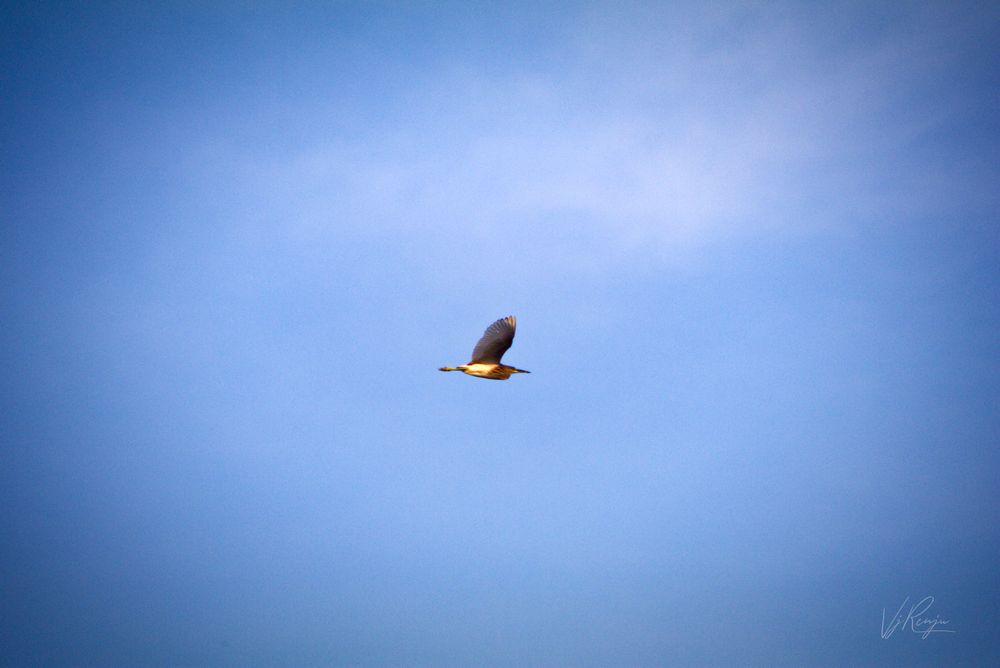 Photo in Nature #flight #bird #sky #blue