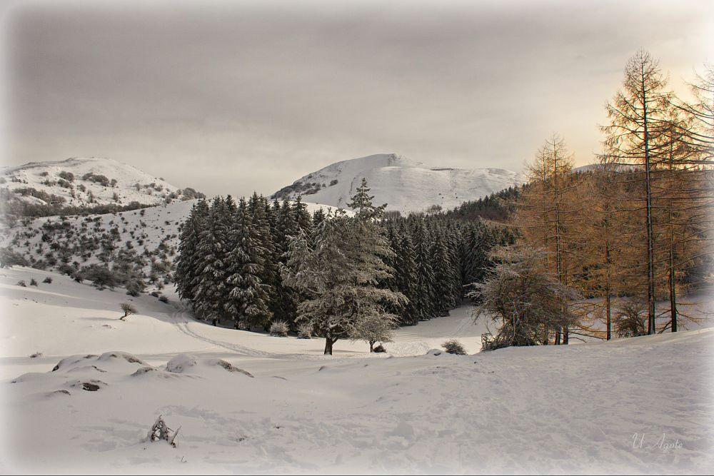 Photo in Landscape #cmoreca