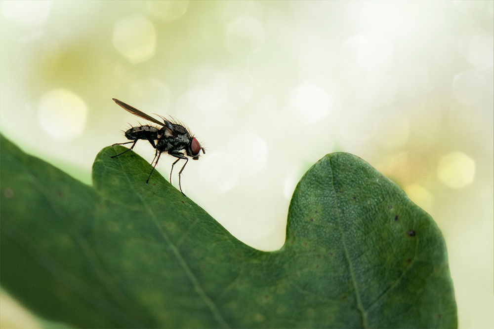 Photo in Macro #insects #makro #nature #midge