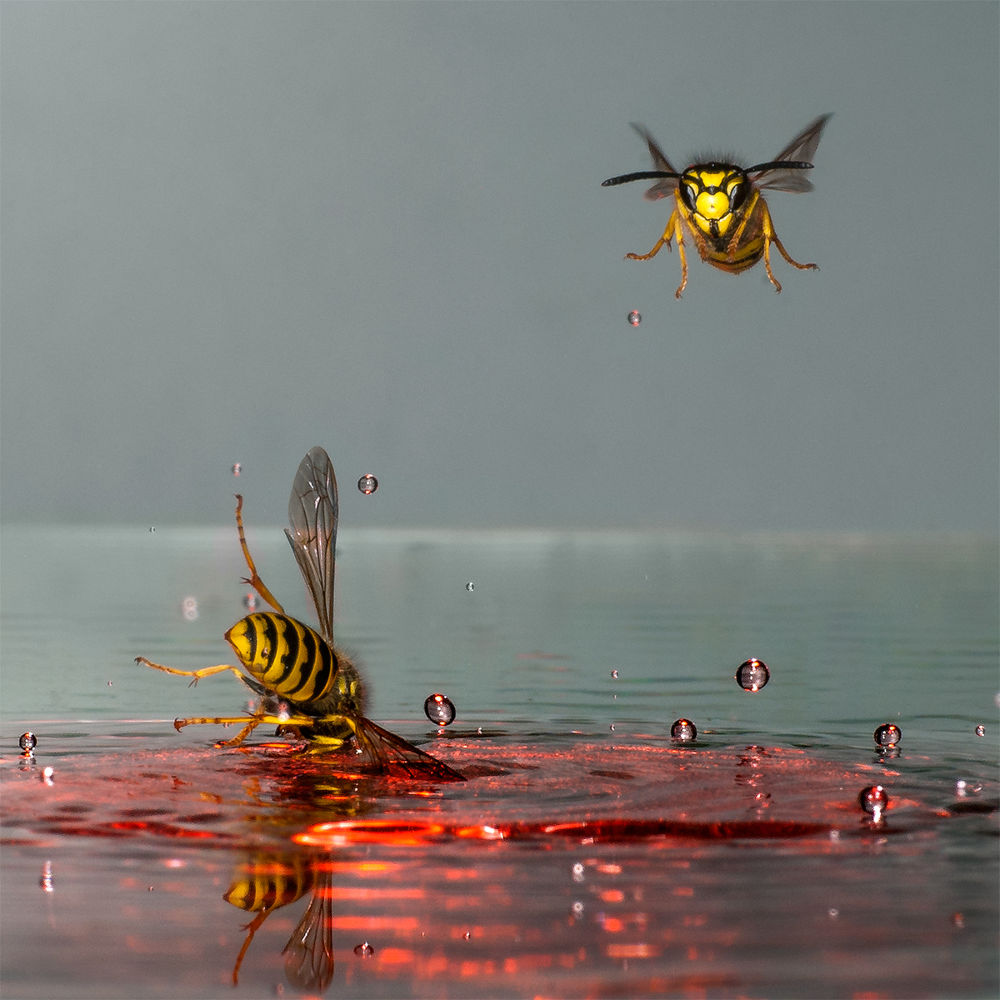 Photo in Macro #wasps #waterdrops #insects