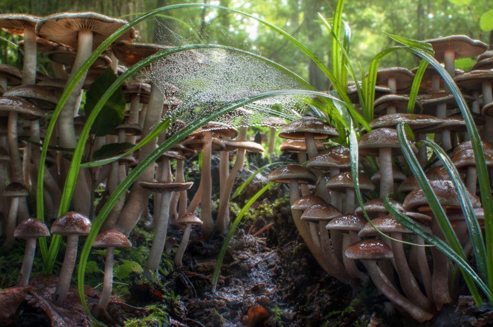 Photo in Nature #fungus #mushroom #nature #forest #autumn #makro #youpic #korazija