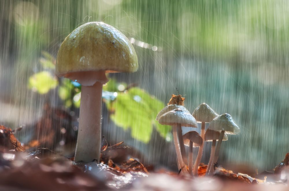 Photo in Nature #fungus #mushroom #autumn #nature #forest #insects #nikon #youpic #korazija