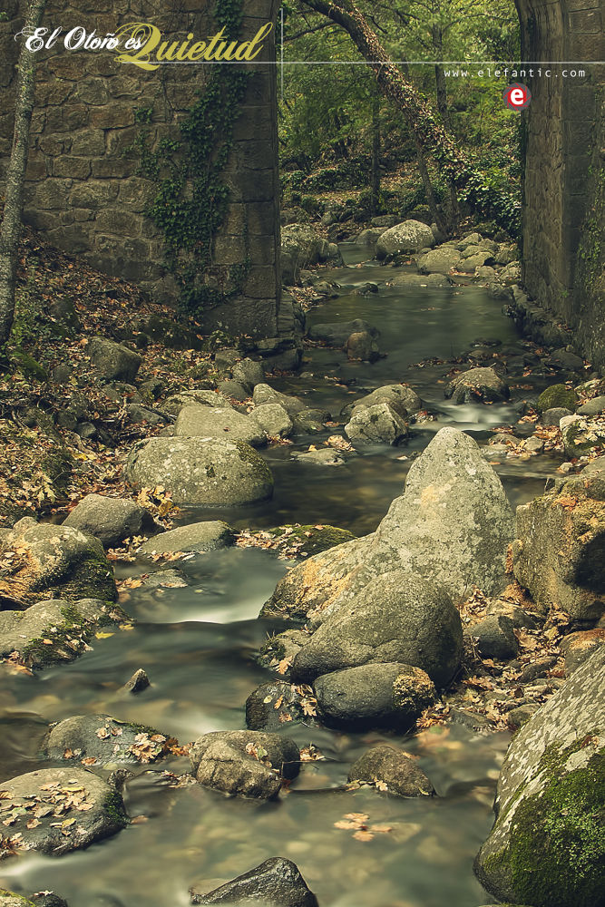 Photo in Nature #otoño #puente #agua #hojas #naturaleza #bridge #water #nature #autumn #fall #leaf #leaves