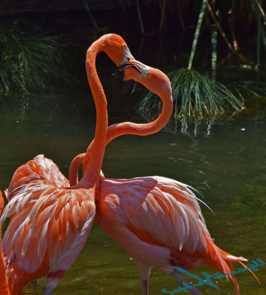 Photo in Animal #birds #flamingos #temaiken