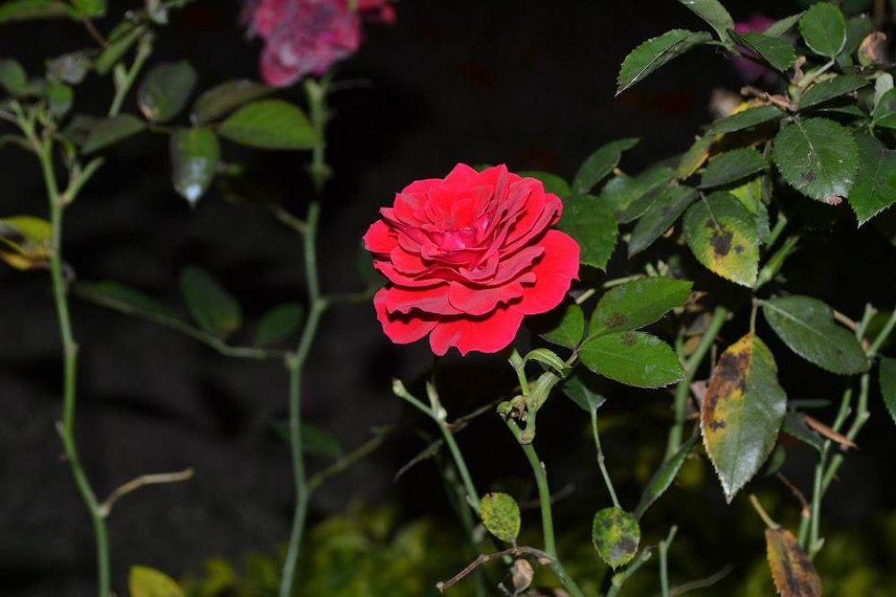 Photo in Random #flor #guadalajara