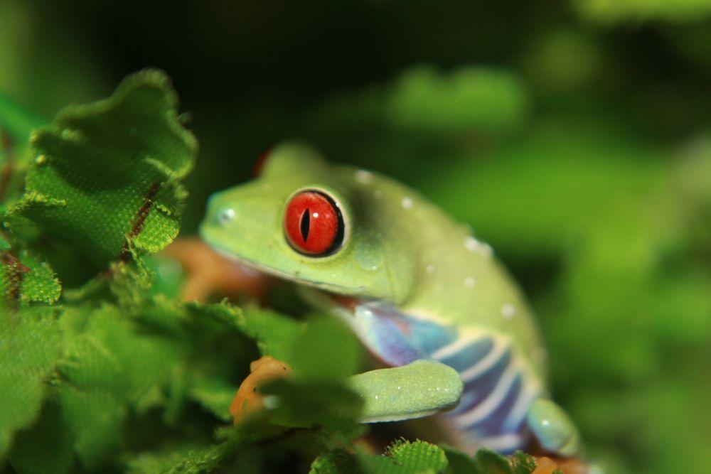 Photo in Nature #treefrog #nature