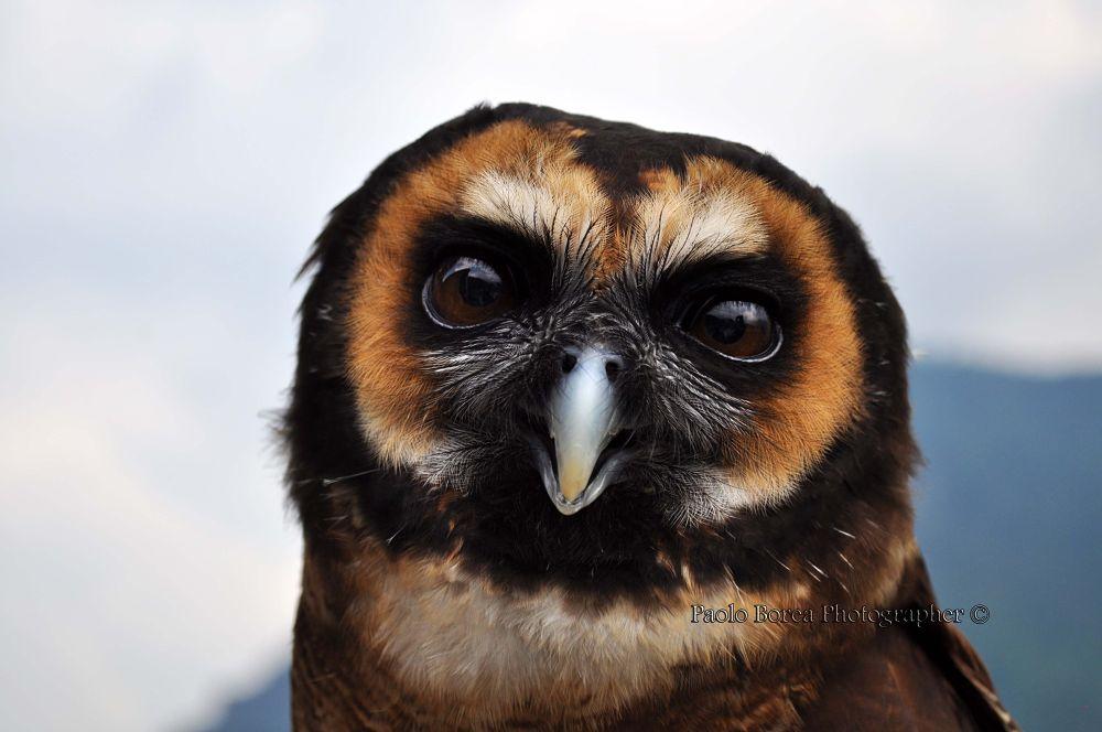 Photo in Animal #rapace #uccello #piume #giallo #italia