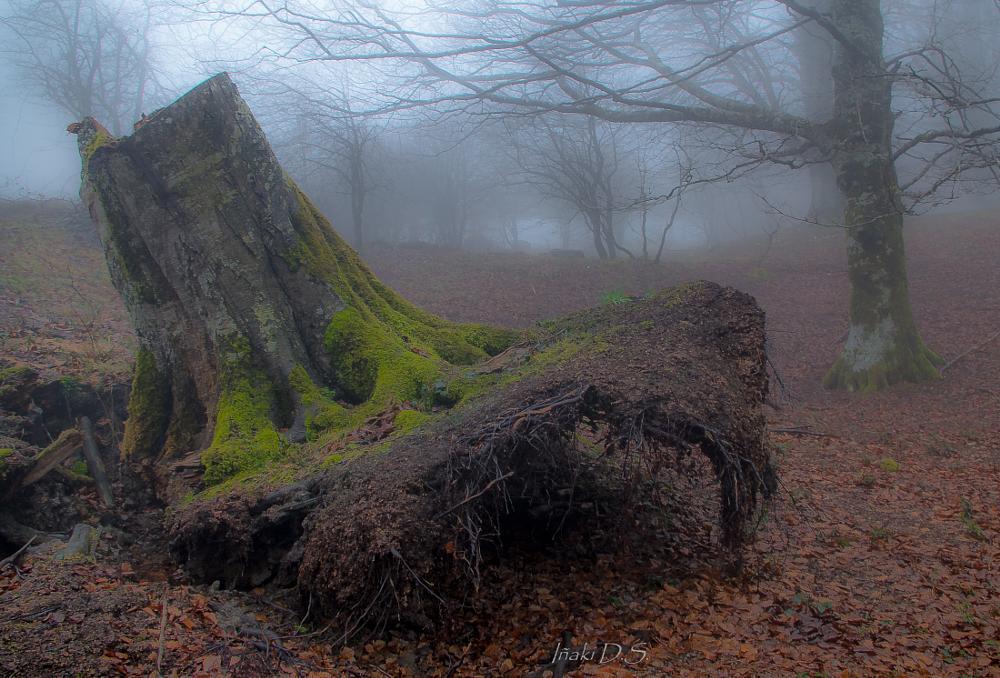 Photo in Nature #arbol #tronco #niebla
