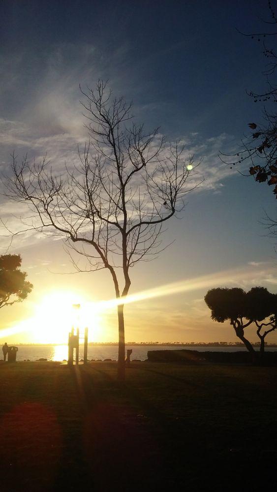 Photo in Landscape #sunset #sunset trees #marina #chula vista