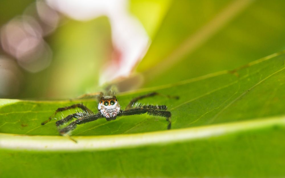 Photo in Nature #macro #nature #spider #eyes #colors