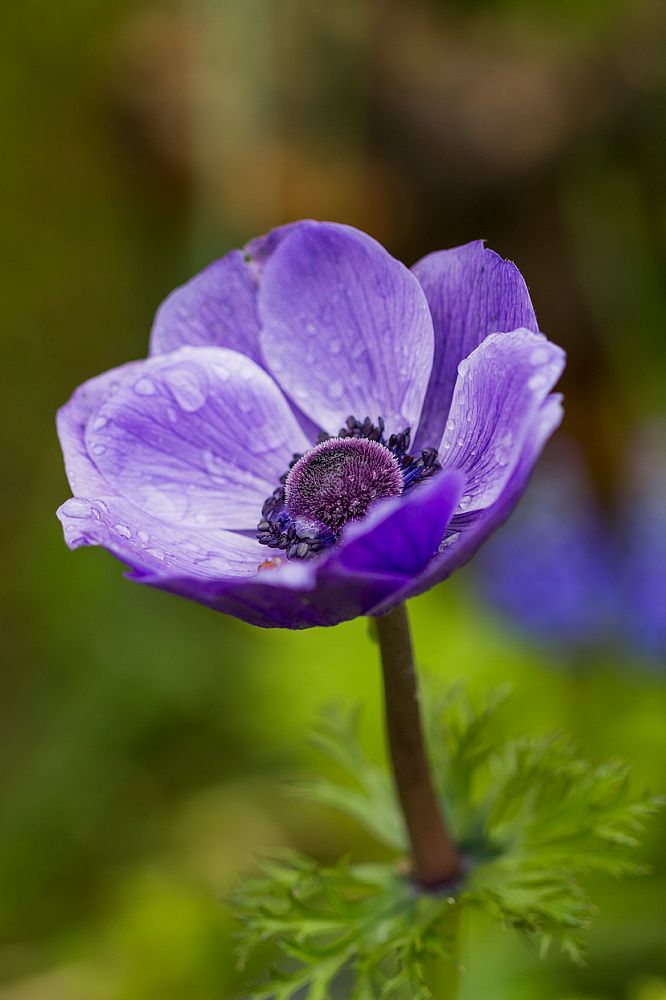 Photo in Nature #flores #jardin #petalos #natural #naturaleza #floral