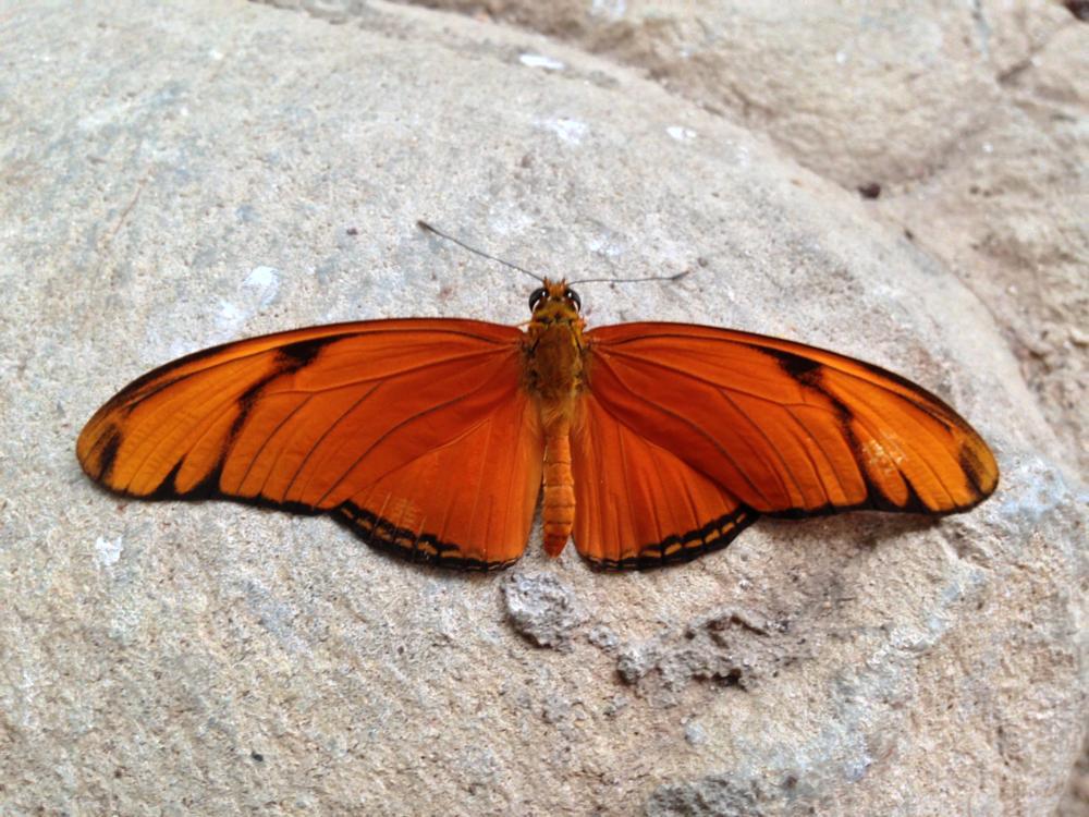 Photo in Random #buterfly #vlinder #vlindertuin #zeeland #kwadendamme