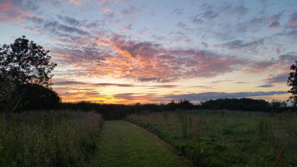 Photo in Landscape #sunset #path #field