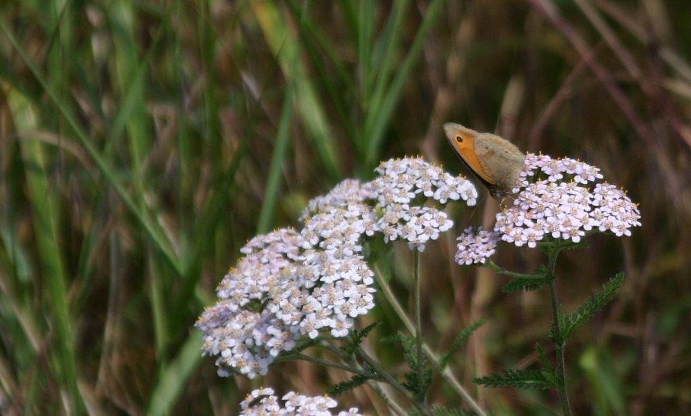 Photo in Nature #butterfly #flower #field