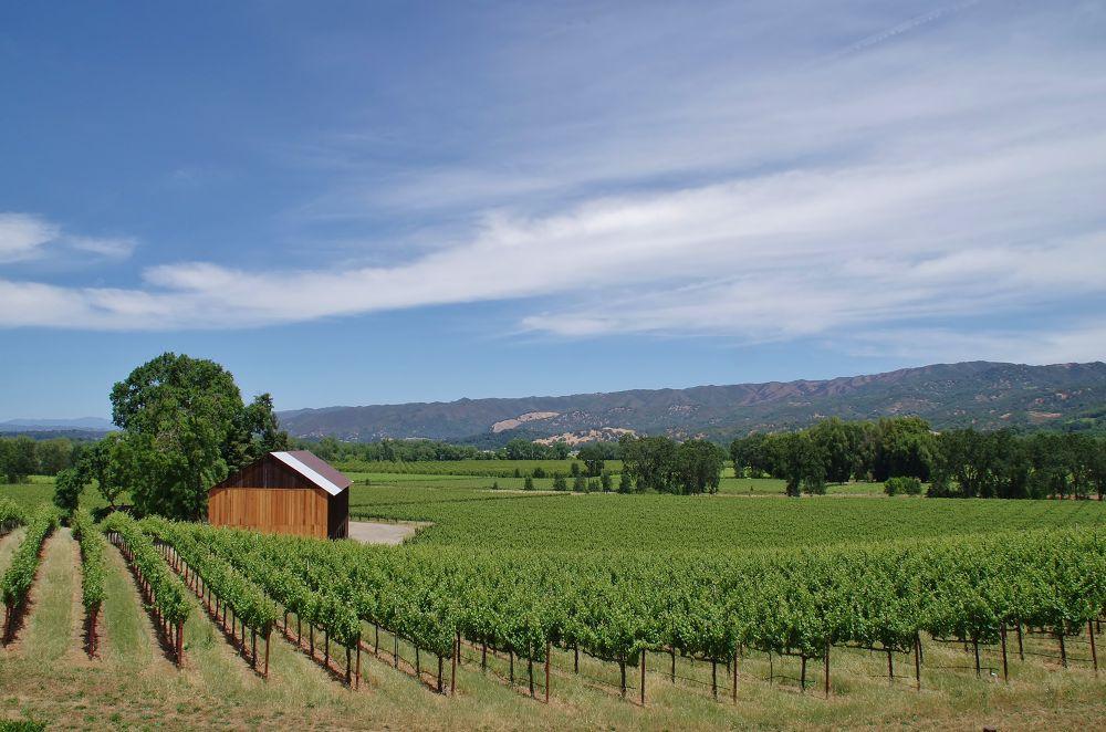 Photo in Random #vineyards #grapes #beautifulvalley #whereilive