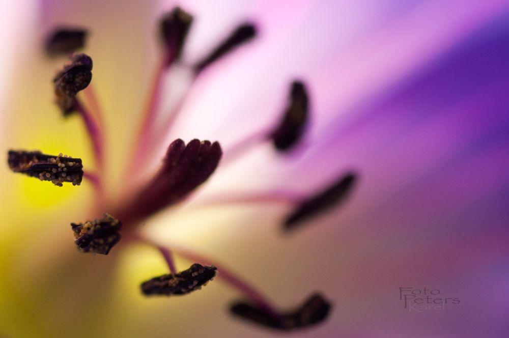 Photo in Macro #macro #flower #color