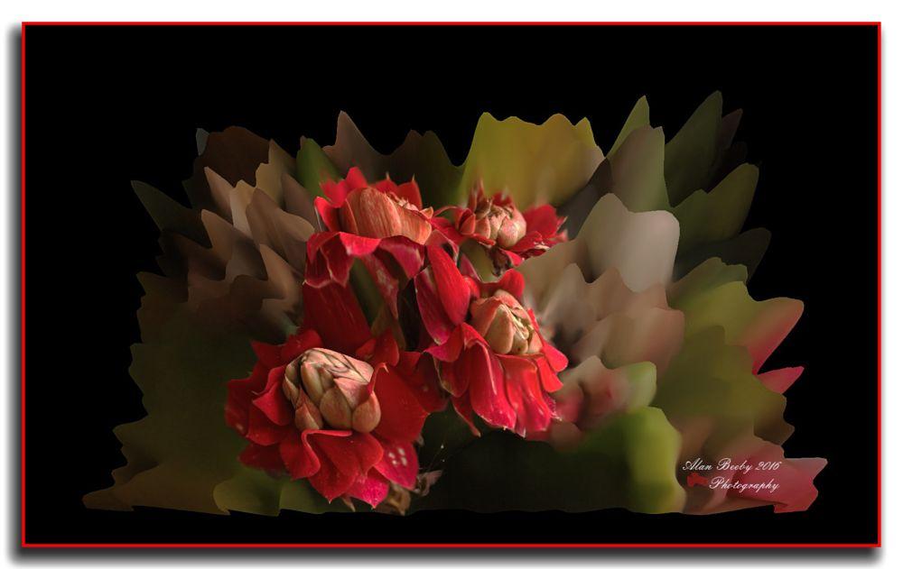 Photo in Fine Art #flower #nature #colour
