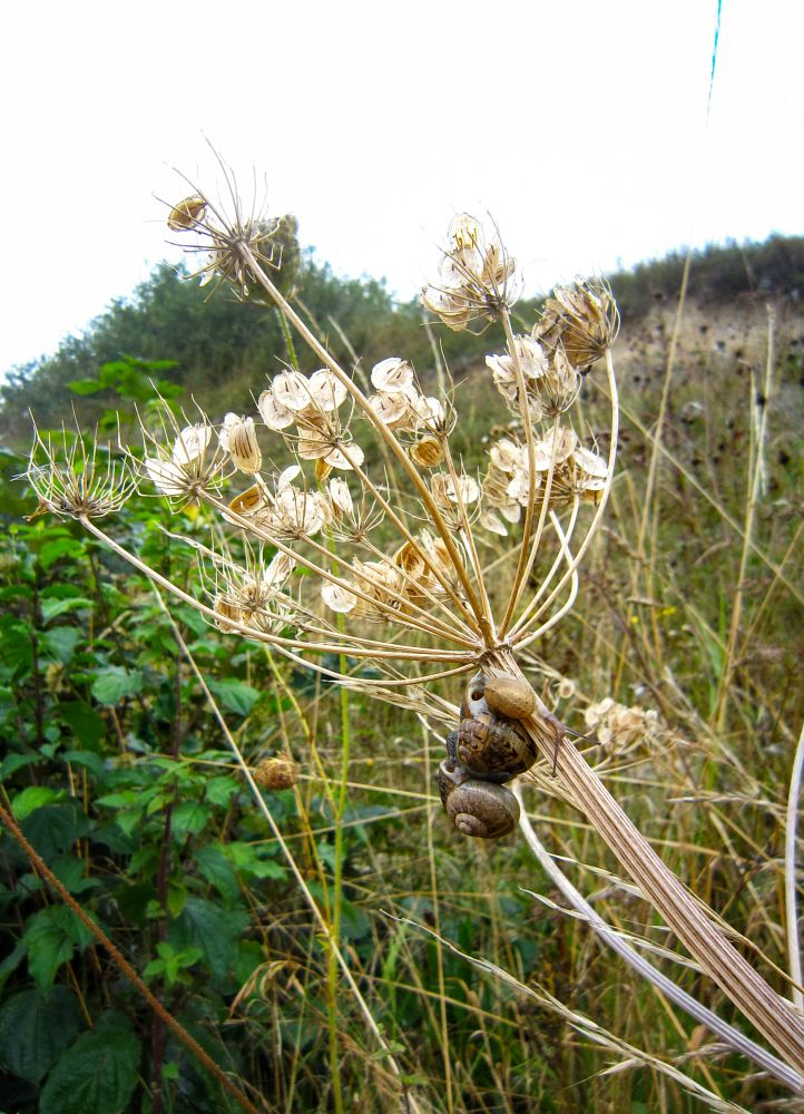 Photo in Nature #snail #snails #family #seed head #autumn