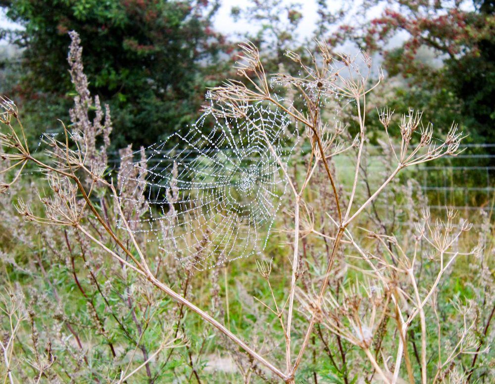Photo in Random #spider #spider's web #seed heads #autumn #mist #fog #chilterns
