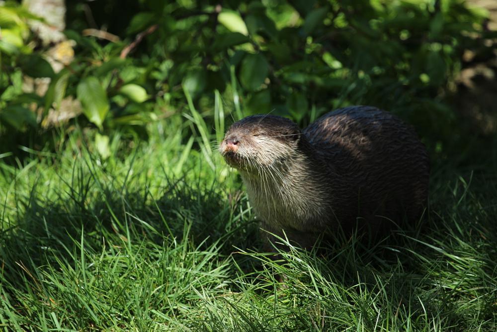 Photo in Animal #otter