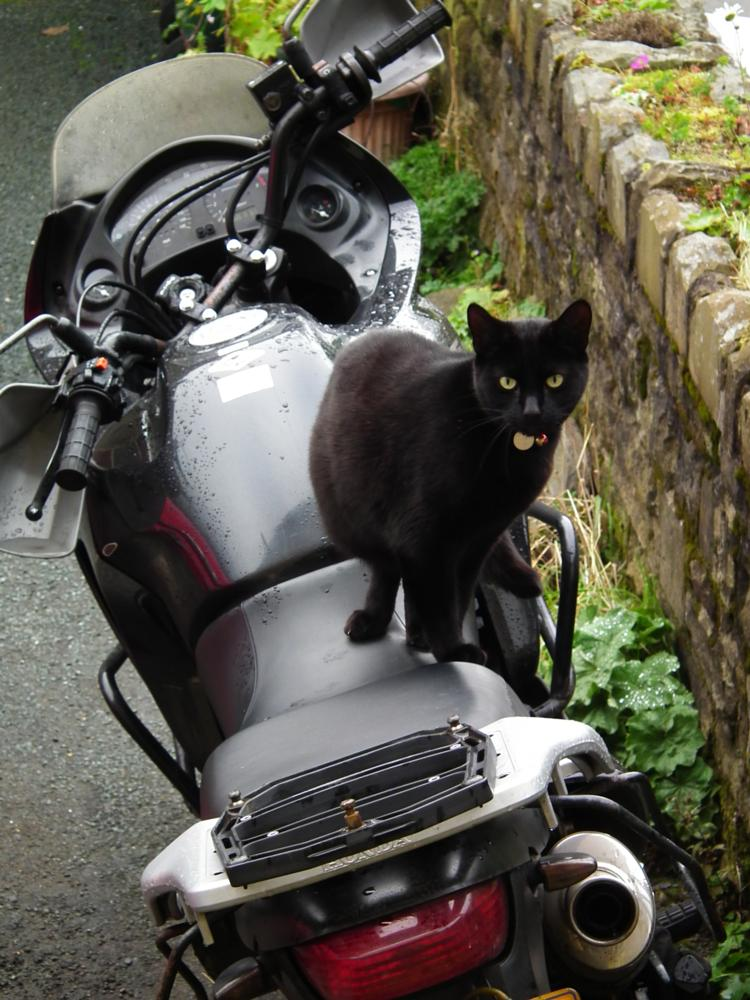 Photo in Animal #honda #kitten #motorbike