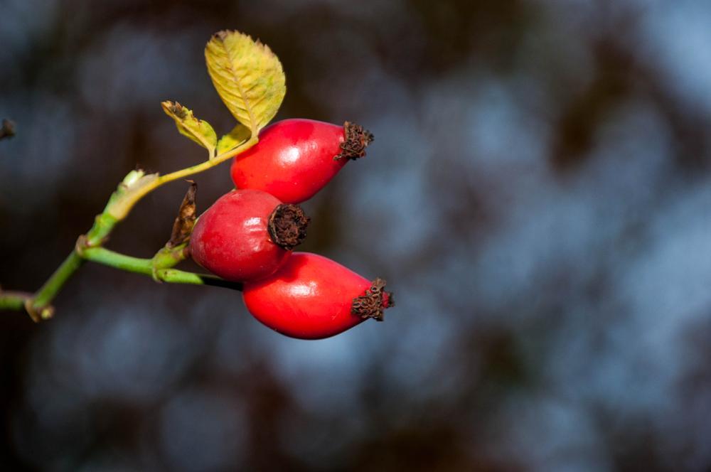 Photo in Nature #red #berris #fall