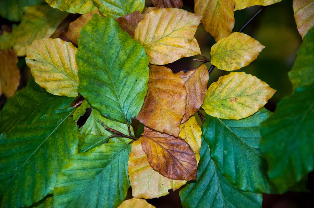 Photo in Nature #leaves #wood #fall