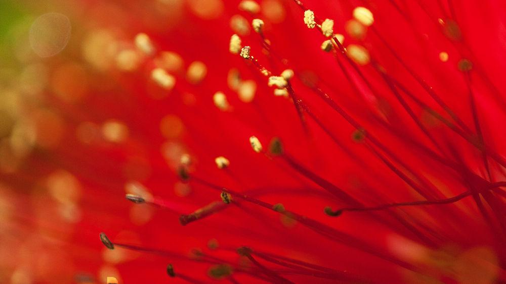 Photo in Random #flower power #flower #red #macro