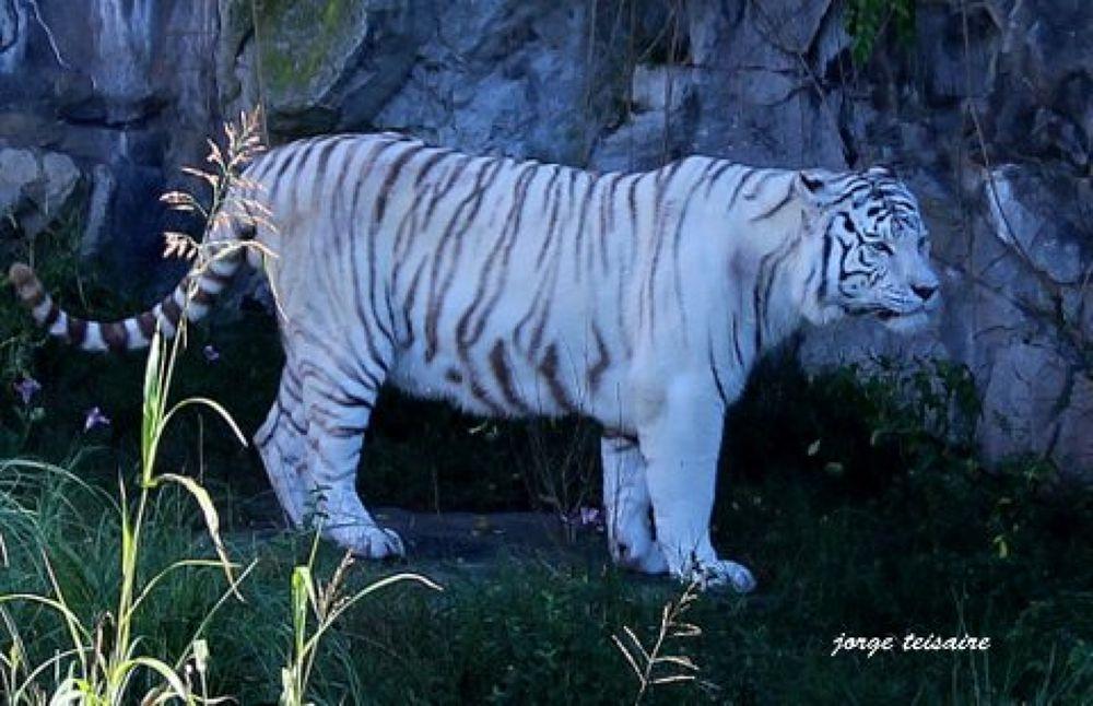 Photo in Animal