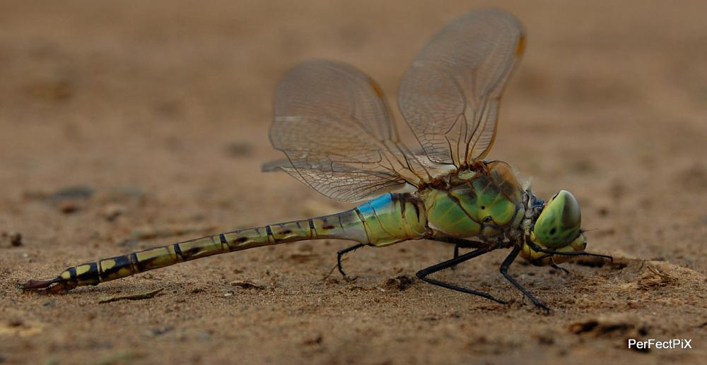Photo in Animal #perfectpix #dragonfly #insect