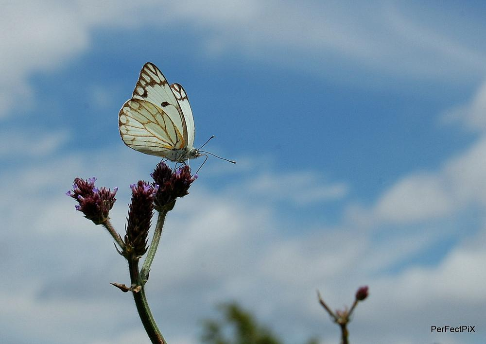 Photo in Animal #perfectpix #butterfly #insect