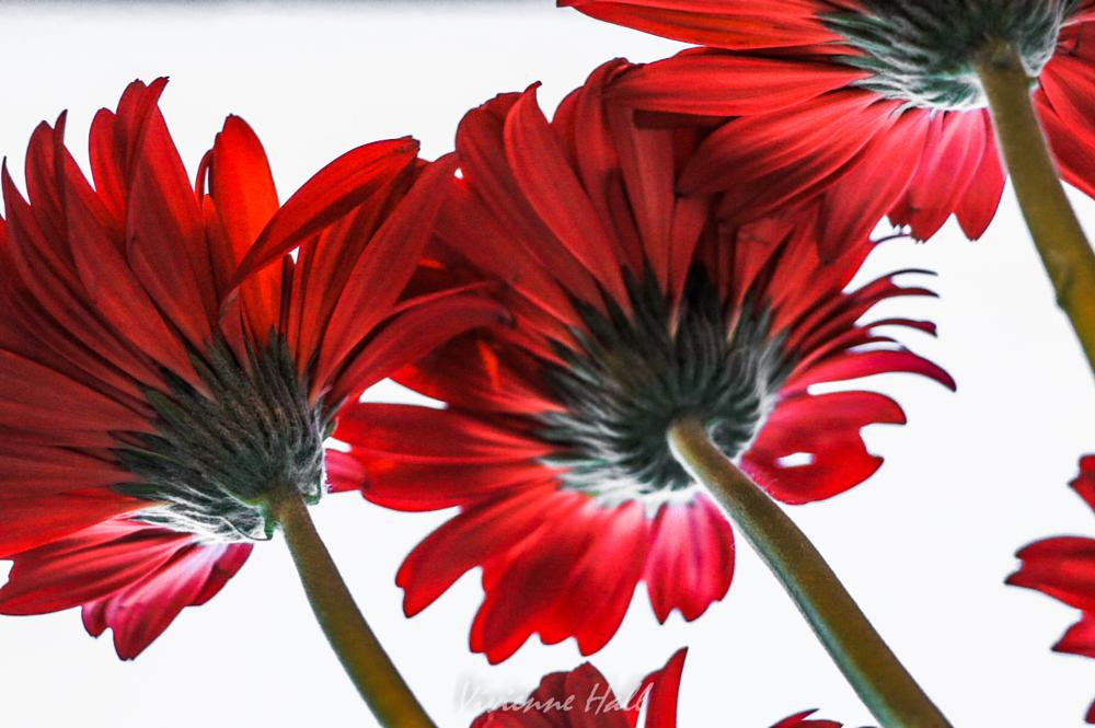 Photo in Nature #flowers #red #white #stalks #green